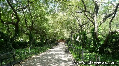 Crab apple tree path in the garden