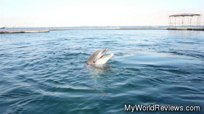 A dolphin seen at the Dolphin Reef