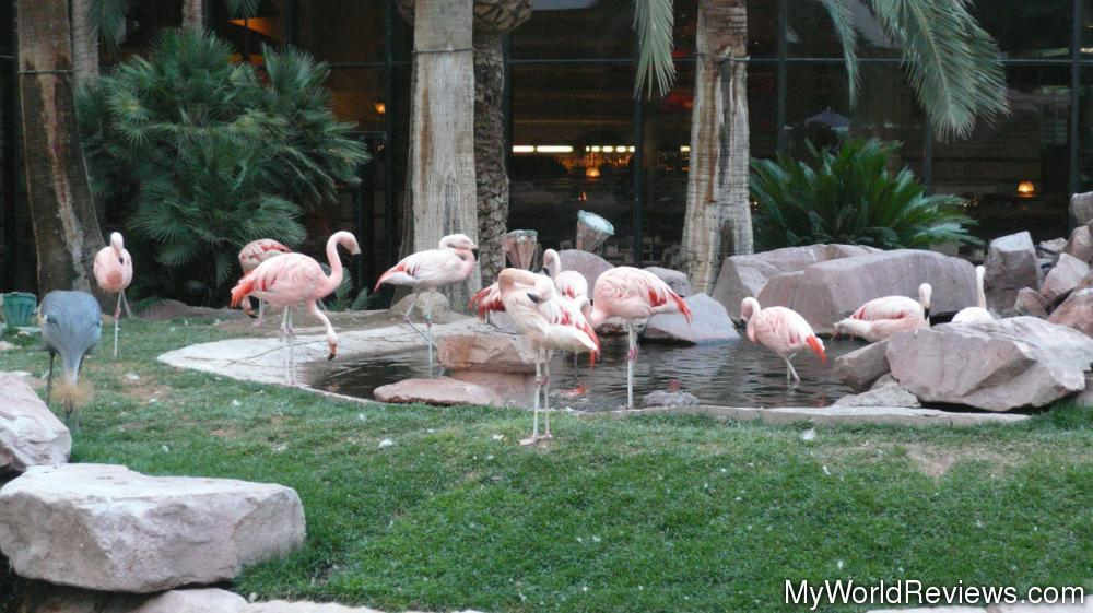 Superb Review Of Flamingo Wildlife Habitat At Myworldreviews Com Download Free Architecture Designs Lukepmadebymaigaardcom