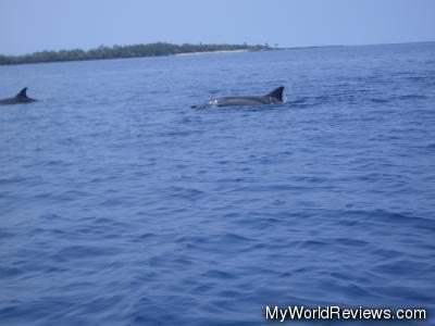 Dolphins in Kealakekua Bay