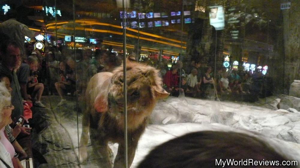casino in vegas with lions