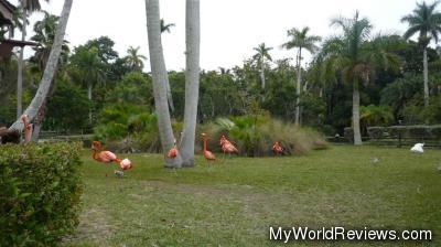 Flamingos roaming in the gardens