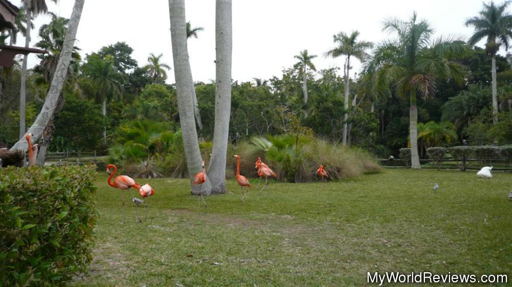 Review Of Sarasota Jungle Gardens At