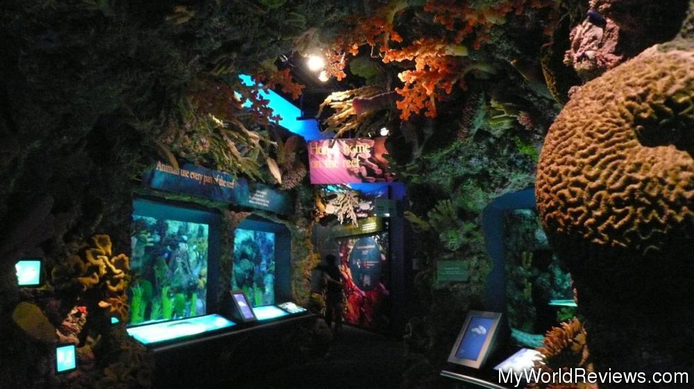 Review Of Shedd Aquarium At